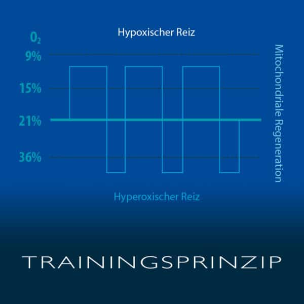 Cellgym_Trainingsprinzip_Zelltraining  CellAir Gecko Cellgym Trainingsprinzip Zelltraining 600x600